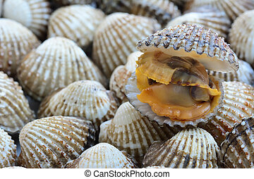closeup of cocklesscallop for food background ; selective...