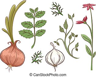 Herbs - Illustration Featuring Different Types of Herbs