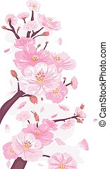 Cherry Blossoms Border - Border Illustration Featuring...