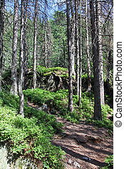 Mala studena dolina - valley in High Tatras, Slovakia - Mala...