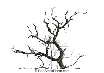 dead tree branches isolated. - dead tree branches isolated...