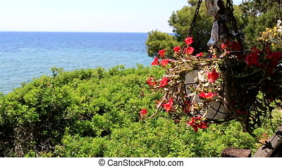 Pot of flowers on front porch. Sithonia peninsula. Northern...