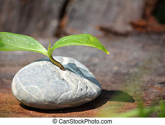 Plant germinates in Stone - Symbolic for Outstanding