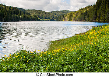 Yellow flowers on the lake.