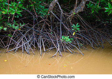 Mangroves trees in water at low tide