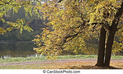 Beautiful autumn tree on the river bank in park in a sunny day