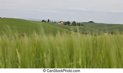 Summer rural landscape in Tuscany with a green grass in the foreground