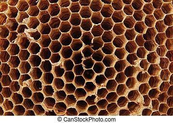 Hornet nest - Detail of a empty hornet nest - it is much...