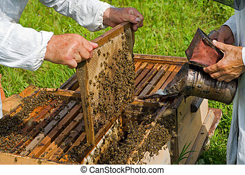 Beehive 3 - A close-up of the beehive. Two beekeepers work...
