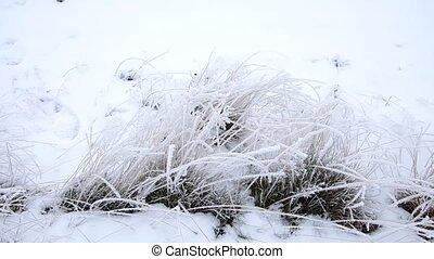 Frozen grass in early winter