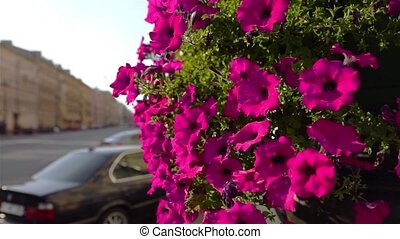 Beautiful Flower Ornament Decoration On Street - beautiful...