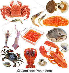 Collection of seafood - Animal set, shellfish seafood crab...