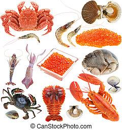 Collection of seafood - Animal set, shellfish seafood crab...