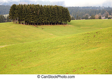 forest of fir trees in the middle of the green lawn in the...