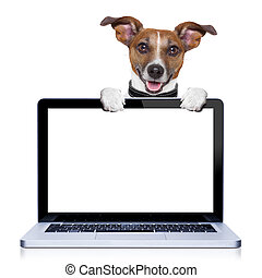 computer dog - jack russell terrier dog behind a pc computer...