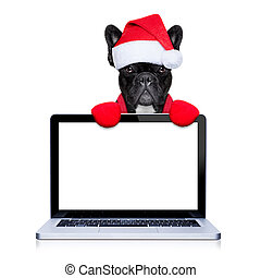christmas dog - christmas french bulldog dog with santa...
