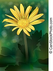 A blooming flower - A blooming yellow flower