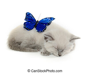 Blue butterfly and kitten