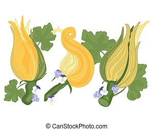 courgette flower - an illustration of three colorful...