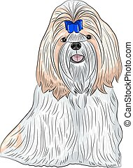 Vector dog breed Shih Tzu - color drawing of the dog breed...