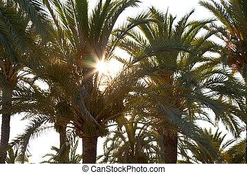 Sun beam in palm leaf.