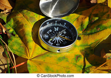 Compass on fallen leaves Autumn in the Park compass rests on...