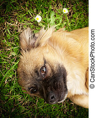 Doggy style - Portrait of cute little doggy on the grass.