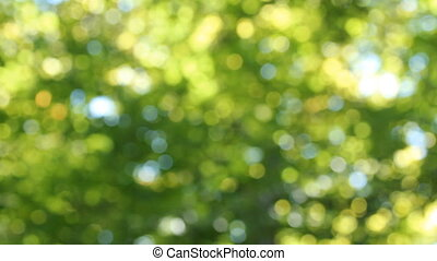 Sunlit, summer forest background - Natural background of...