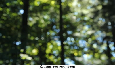 Natural summer forest background - Natural background of...