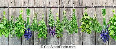 fresh herbs - different fresh herbs hang in bundle on an...