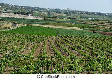 Farmland in Malta, maltese nature