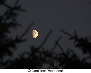 Moon And Silhoutte - Partial moon with silhouette of...