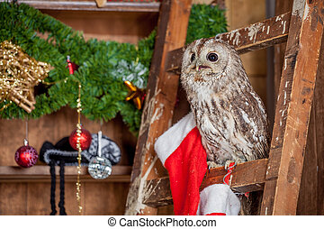Tawny or Brown Owl, Strix aluco, - Tawny or Brown Owl, Strix...