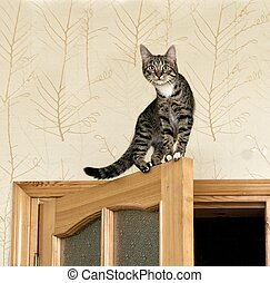 Curious cat on the top of door - Cat, resting cat on the top...