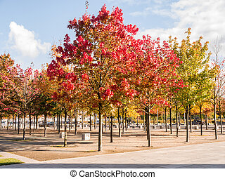 autumn trees in different colors