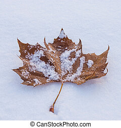 leaf in snow - autumn leaf in snow in daylight