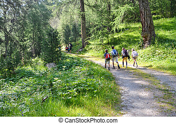 alpin trekking - a group of children walking on the mountain