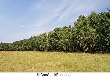 tree line in landscape in summer