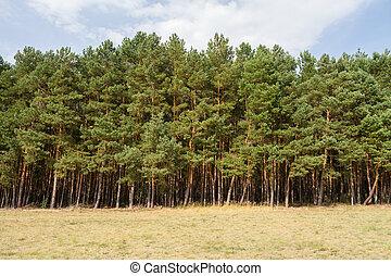 tree line on a field in summer