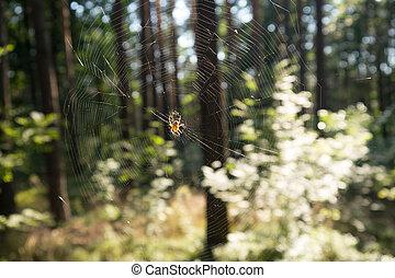 cobweb - a spider on a cobweb