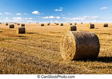straw bales on field with blue sky