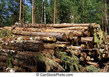 Energy Wood