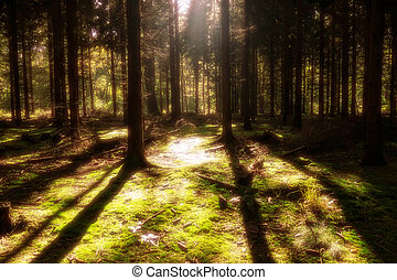 mistery forest - sunlight in a magic forest