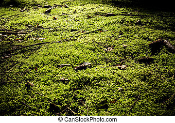 moss texture - moss on a forest floor