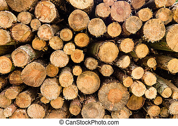 firewood background - Wood planks in a forest