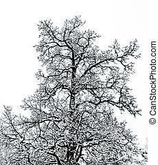 Winter. tree