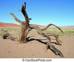 Skeletal tree in the desert