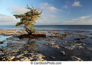 Florida Keys - Rocky outcroppings along the Bahia Honda...