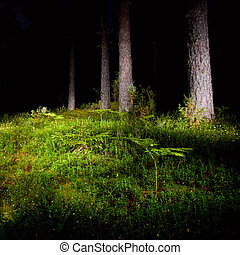 Night forest - Mossy meadow with fern at night pinewood