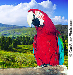 Macaw at wildness - Red-and-green Macaw Ara chloropterus at...